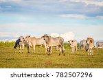 brazilian nelore catle on... | Shutterstock . vector #782507296