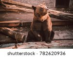 brown bear sits in zoo. brown... | Shutterstock . vector #782620936