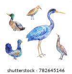 birds living in a swamp. heron  ...   Shutterstock . vector #782645146