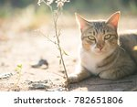 crouching cats are lying on the ... | Shutterstock . vector #782651806