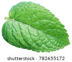 perfect spearmint leaf or mint... | Shutterstock . vector #782655172