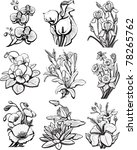 set of sketches of flowers | Shutterstock .eps vector #78265762