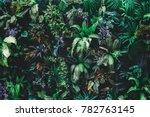 beautiful nature background of... | Shutterstock . vector #782763145