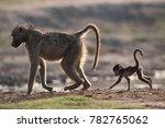 a horizontal  colour photo of a ... | Shutterstock . vector #782765062