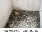 Small photo of Two pigeon chicks just hatched in nest in a corner of a balcony wall with part of their egg shell and feathers scattered about