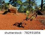 little tree growing in the... | Shutterstock . vector #782931856