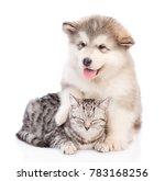 alaskan malamute puppy... | Shutterstock . vector #783168256