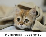 Stock photo cute kitten playing 783178456