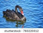 black swan at centennial park ...   Shutterstock . vector #783220312