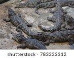 saltwater crocodile  crocodylus ... | Shutterstock . vector #783223312