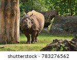 indian rhinoceros in the... | Shutterstock . vector #783276562
