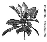 ancient,antique,art,artwork,bay,beauty,big,black,botanical,botany,bull,commercial,cut-out,design,drawing