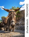 donkey taxi   donkeys used to... | Shutterstock . vector #783410452