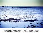 landscape of marsh full of... | Shutterstock . vector #783436252