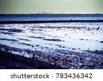 landscape of marsh full of... | Shutterstock . vector #783436342