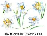 set spring flowers  watercolor  ... | Shutterstock . vector #783448555
