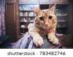 domestic ginger cat at home | Shutterstock . vector #783482746