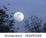 The Moon With The Branches