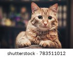 domestic ginger cat at home | Shutterstock . vector #783511012