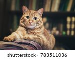 domestic ginger cat at home | Shutterstock . vector #783511036