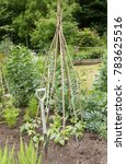 Small photo of Home Grown Organic Vegetables Growing on an Allotment in a Vegetable Garden in Rural Devon, England, UK