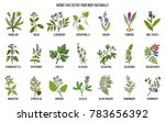best herbs for body detox. hand ... | Shutterstock .eps vector #783656392