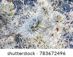 close up of snowy conifer tree... | Shutterstock . vector #783672496