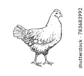 hand drawn chicken engave style ... | Shutterstock .eps vector #783683992