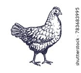 hand drawn chicken engave style ... | Shutterstock .eps vector #783683995
