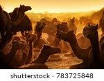 pushkar. rajasthan. india  ... | Shutterstock . vector #783725848