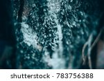 macro shot of micro plants... | Shutterstock . vector #783756388