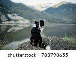 bborder collie sitting on a... | Shutterstock . vector #783798655