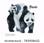 hand painted realistic...   Shutterstock . vector #783908632