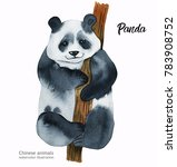 hand painted realistic... | Shutterstock . vector #783908752