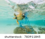 Green Turtle Entangled In A...