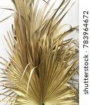 Dried Sugar Palm Leaf On White...