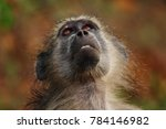 baboon sitting next to the road ... | Shutterstock . vector #784146982