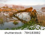 Fallen Tree At The Banks Of A...