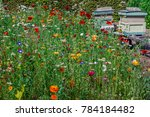 Bright Flower Meadow With...