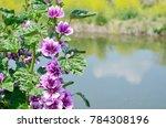 Hollyhock And Rape Flower ...