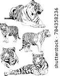 vector drawings sketches... | Shutterstock .eps vector #784358236