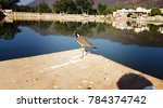 Small photo of Lovely Burd at Bundi Fort