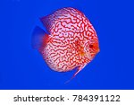 discus are colorful  graceful... | Shutterstock . vector #784391122