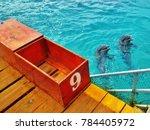 isla mujeres  cancun  mexico... | Shutterstock . vector #784405972