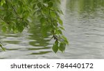 nature background with birch... | Shutterstock . vector #784440172