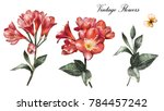 Stock photo red watercolor flowers floral illustration leaf and buds botanic garden branch for wedding 784457242