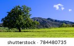 tree to the left with clouds to ... | Shutterstock . vector #784480735