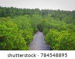 wooden bridge leading to the... | Shutterstock . vector #784548895