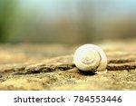 An Empty Snail Shell Sitting O...