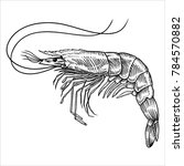 hand drawn sketch shrimp... | Shutterstock .eps vector #784570882